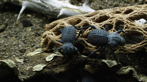 Several Blue Death Feigning Beetles and a Magnificent Velvet Ant crawls by Footage
