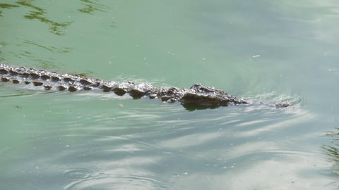 Crocodile is swimming and watching its prey Stock Video Footage