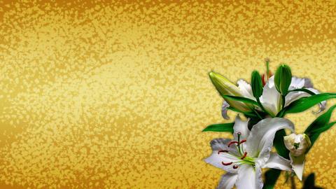 百合の開花と和柄(タイムラプス) CG動画素材
