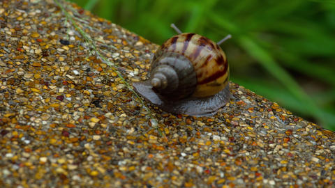 Garden snail crawling on pavement GIF