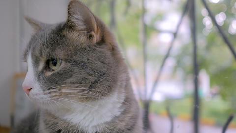 Cat sitting on windowsill GIF