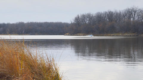 Motor boat floats on autumn lake Live Action