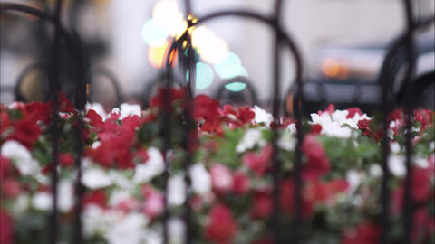 Racking focus from city street to a flower bed in the foreground Footage