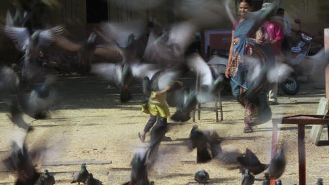 Small child feeds pigeons and they fly into the air Footage