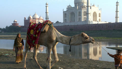 Boy, two ladies and a camel walk past Taj Mahal Footage