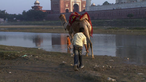 Two young boys guide a camel near water with the Taj Mahal in the background Footage