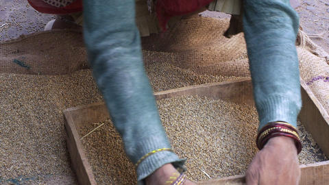 View of women sifting grain Footage