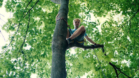 Young man sitting in a tree with a long rope and belts in summer in slo-mo Footage