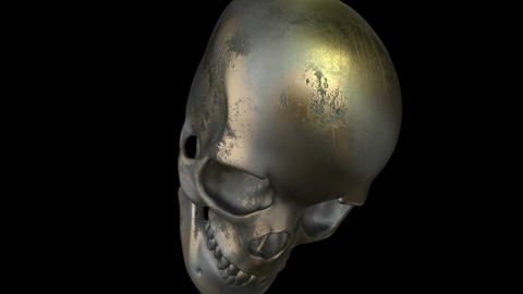 Model Of Human Skull Isolated On black Screen with alpha channel Animation