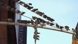 Pigeons On A Street Pole In New York City stock footage