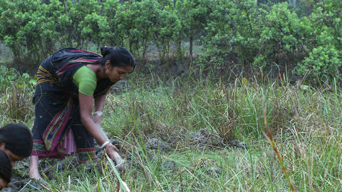 Indian woman tilling a wet field by hand Footage