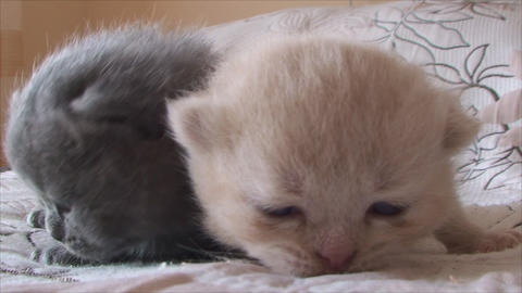 small kittens Live Action