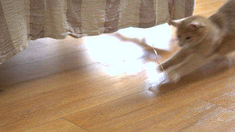 Cute ginger cat lying in bed under a blanket. Fluffy pet comfortably settled to Footage