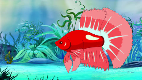 Big Red Aquarium cockerel fish in a tank Animation