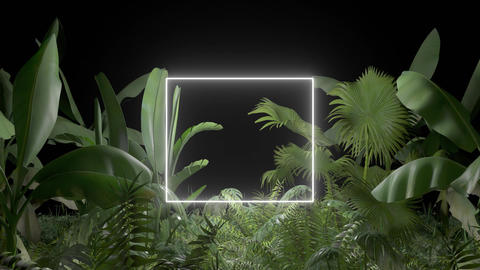 Tropical plant with neon light on an black background Stock Video Footage