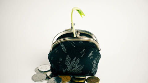 Plant growing from purse, money business finance growth concept, isolated on Live Action