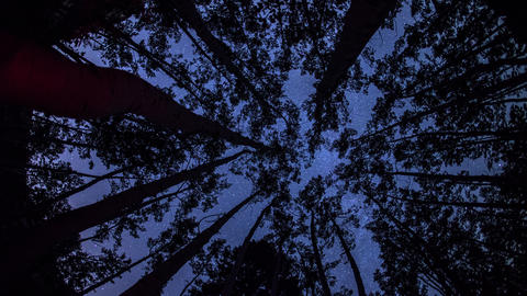 Astro Timelapse through trees Footage