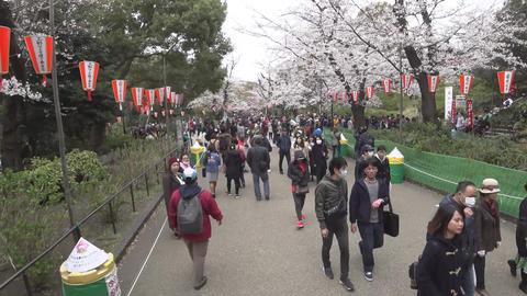 (3 times speed) Walking through Ueno Park in Tokyo Footage