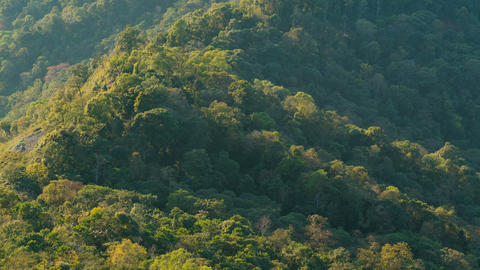 The forest on the green hilltop mountain with morning sunshine Footage