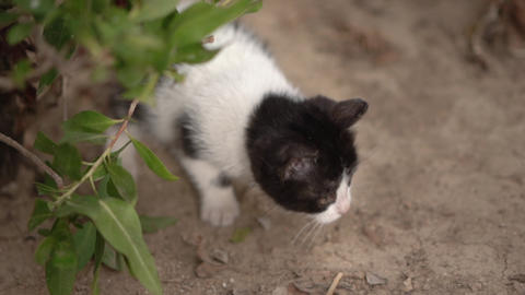 Cute little black and white kitty play in the street in slow motion Live Action