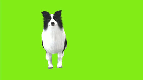 11 Animation of a sheep dog walking with a green background Animation