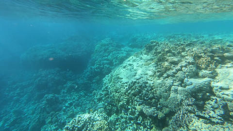 The view above the water on the beach and on the coral reef under water Footage