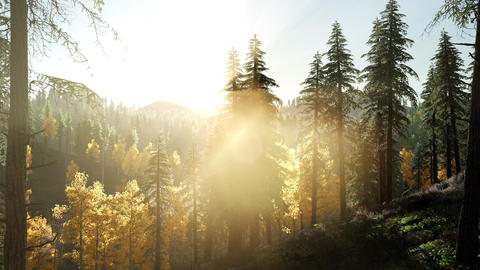 Sun Shining Through Pine Trees in Mountain Forest Archivo
