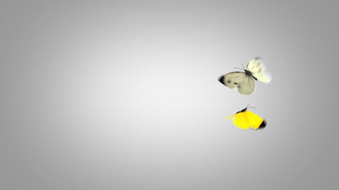 Yellow and White Butterflies Playfully Fly on a Green Background Animation