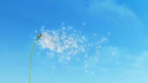 Dandelion Clouds 4K Animation