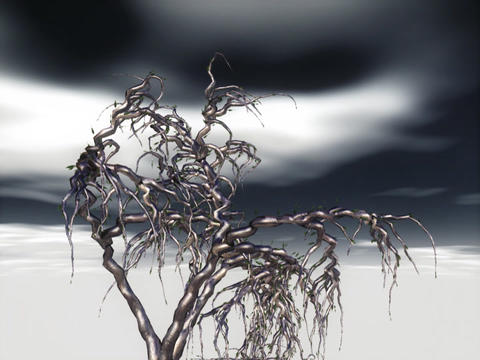 Ghost Tree Stock Video Footage