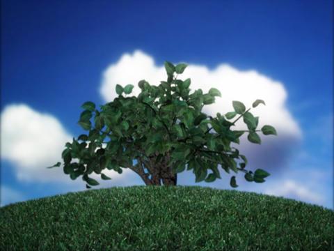 Growing Bush Stock Video Footage