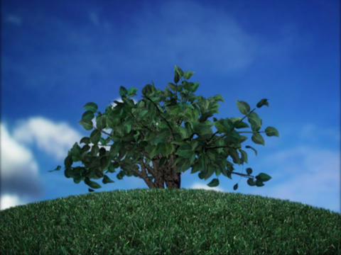Growing Bush Animation