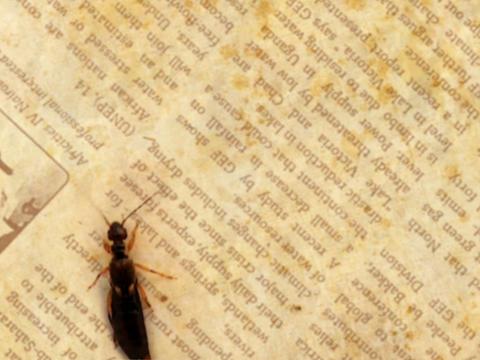 Newspaper Insect Loop Stock Video Footage