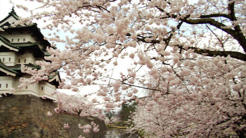 Hirosaki Castle With Sakura Stock Video Footage