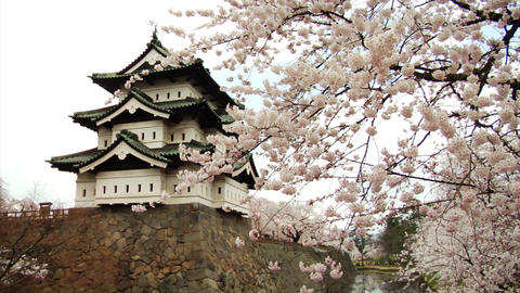 Hirosaki Castle With Sakura Stock Video Footage