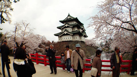 Tourists Taking Photos Of Sakura Stock Video Footage