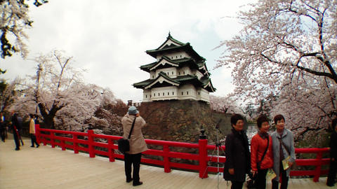 Tourists Taking Photos Of Sakura Stock Video Footage