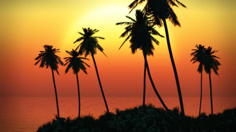 1063 Pacific Island Ocean Palm Sunset Stock Video Footage