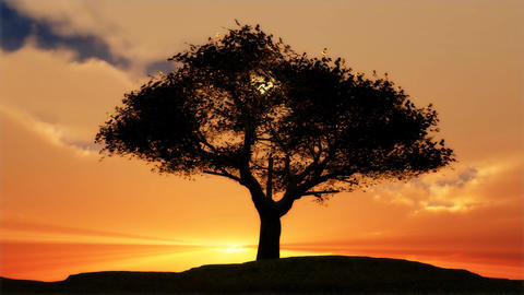1076 Lone Tree Spring Sunset Stock Video Footage