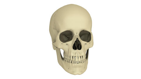 skull model Stock Video Footage