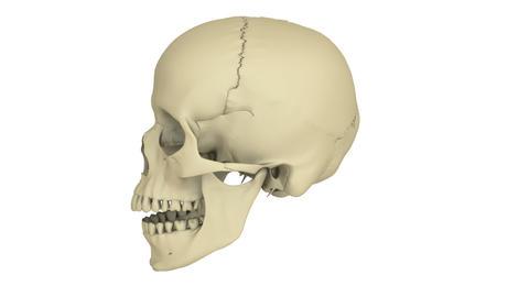 skull model Stock Video Footage