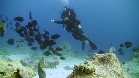Napoleon fish and divers on Coral Reef, Red sea Stock Video Footage