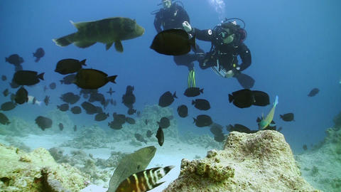 Napoleon fish and divers on Coral Reef, Red sea Footage