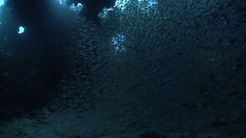 Huge Shoal Fish on Coral Reef, Red sea Stock Video Footage