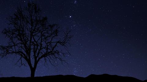night sky stars tree time lapse 10857 Stock Video Footage