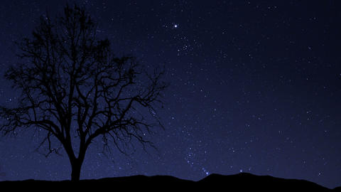 night sky stars tree time lapse 10857 Footage