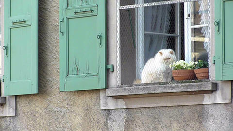 Cat at a window Live Action