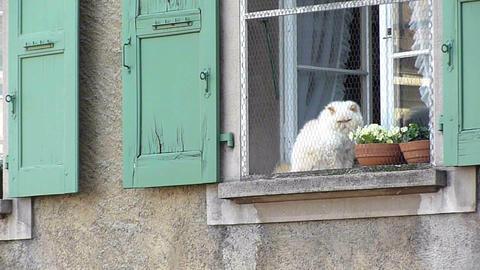 Cat at a window ビデオ