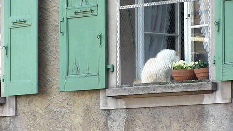 Cat at a window Stock Video Footage