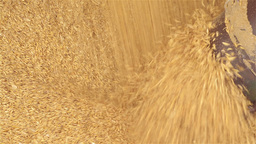 Oats Being Augered into a Silo Stock Video Footage